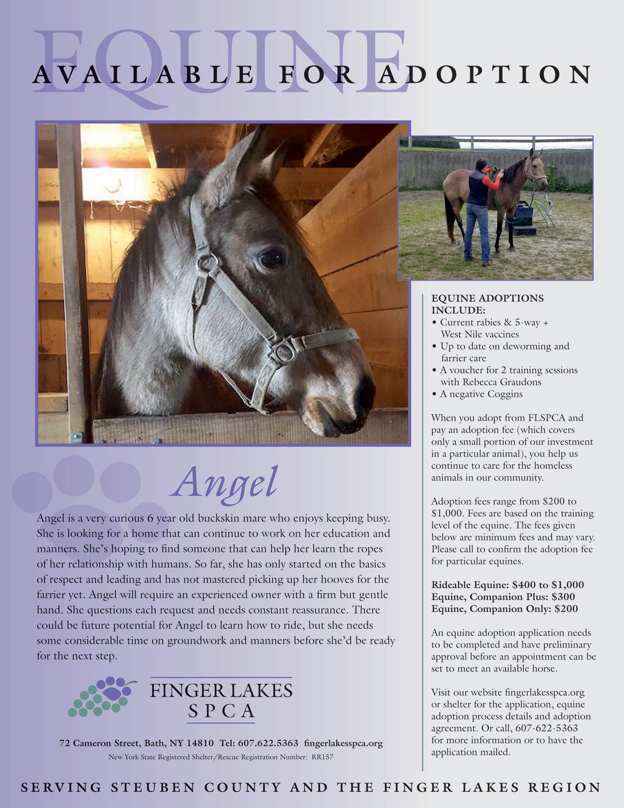 angel-equine-project-homeward-bound-2019