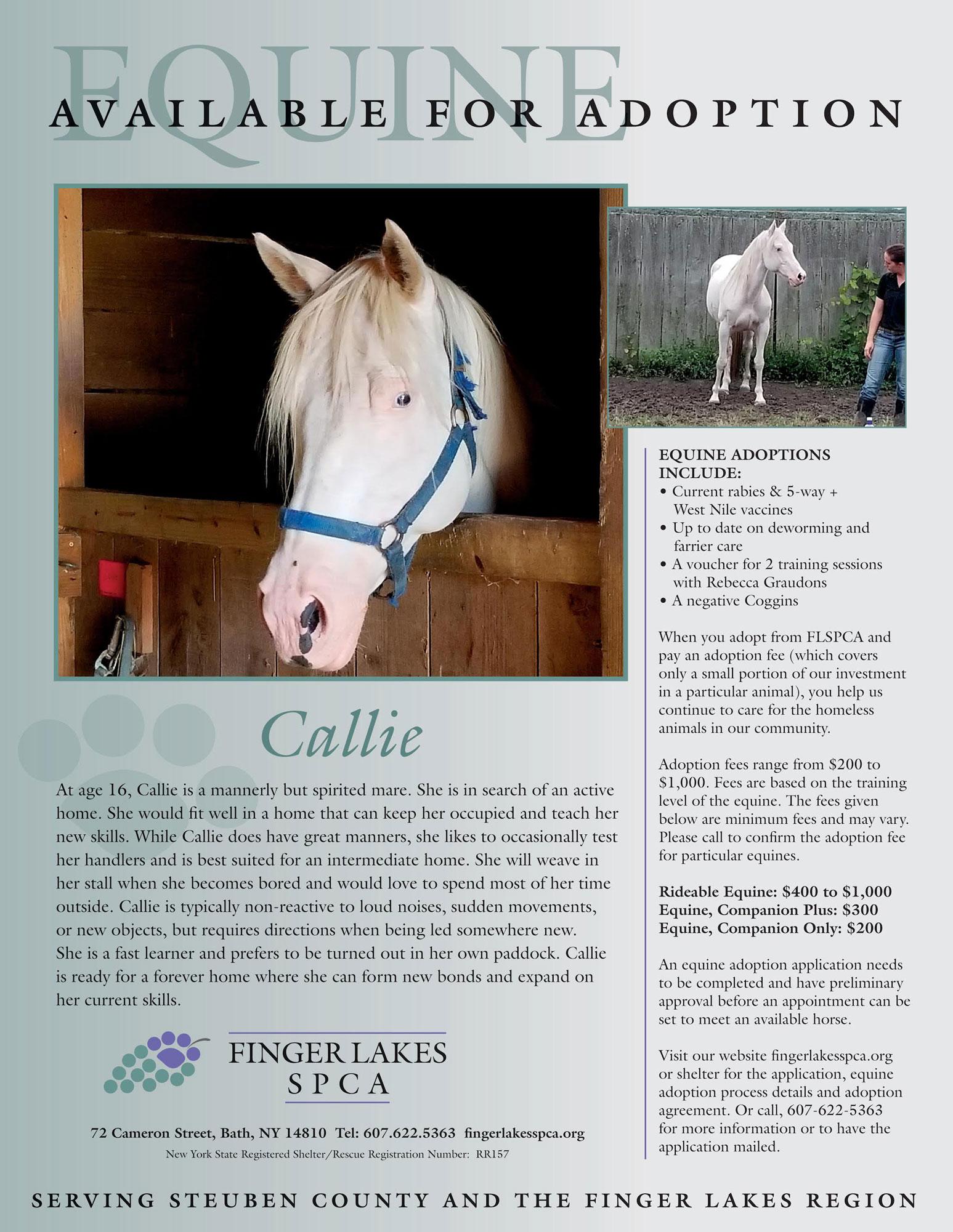 callie-equine-project-homeward-bound-2019