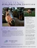 lakota-equine-project-homeward-bound-2019