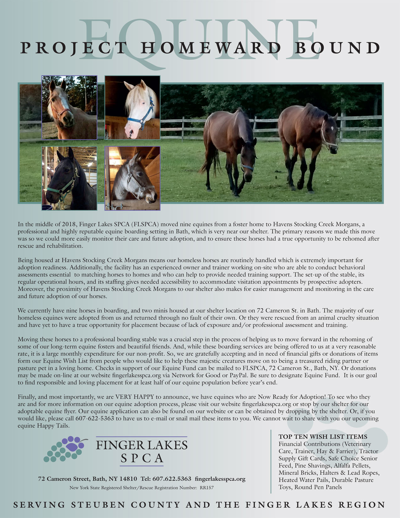 equine-project-homeward-bound-article2019