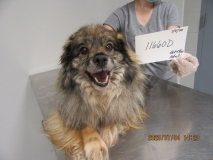 flspca-rescue-dog