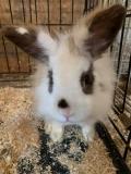 flspca-rescue-rabbit