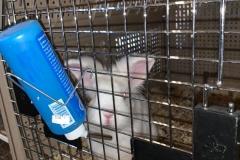 flspca-rescue-rabbit-02