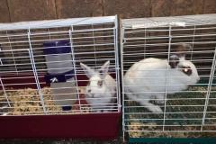 flspca-rescue-rabbit-03