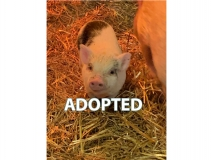 Jessie - Adopted