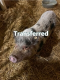 Juliet - Transferred to another shelter