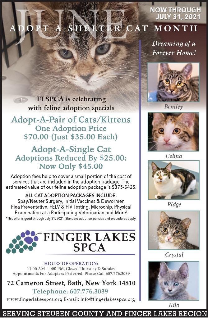 Finger Lakes SPCA   Cat Adoption Special June 2021